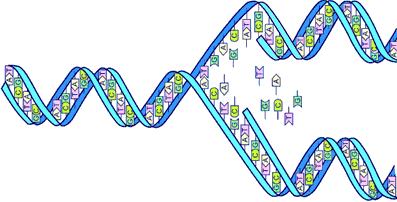 GenomesPart1
