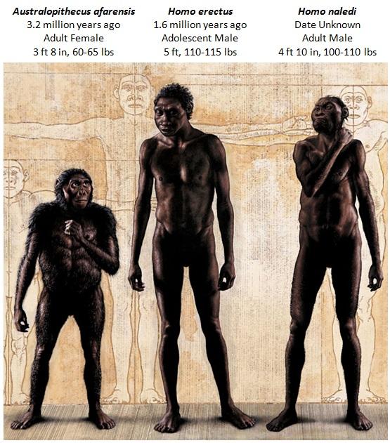 erectusnaledi